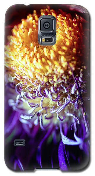 Dying Purple Chrysanthemum Flower Background Galaxy S5 Case by John Williams