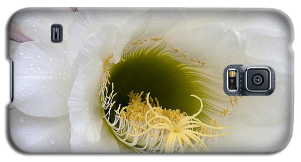 Galaxy S5 Case featuring the photograph Easter Lily Cactus by Phyllis Denton