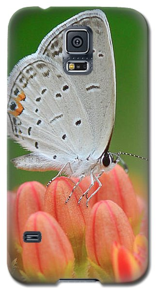 Eastern Tailed Blue On Butterfly Weed Galaxy S5 Case