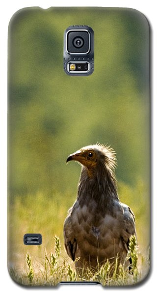 Egyptain Vulture  Galaxy S5 Case