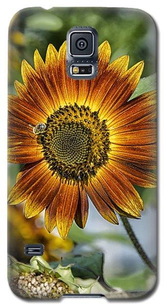 End Of Sunflower Season Galaxy S5 Case