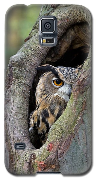 Eurasian Eagle-owl Bubo Bubo Looking Galaxy S5 Case