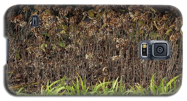 Galaxy S5 Case featuring the photograph Fall Contrasts by Deborah  Crew-Johnson
