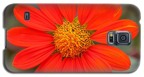 Galaxy S5 Case featuring the photograph Fall Flower by Edward Peterson