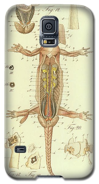 Fire Salamander Anatomy Galaxy S5 Case