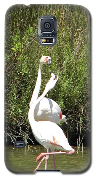 Flamingos Galaxy S5 Case by Manuela Constantin