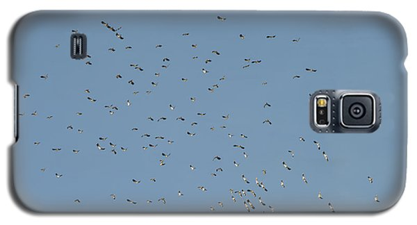 Flock Of Beautiful Migratory Lapwing Birds In Clear Winter Sky Galaxy S5 Case