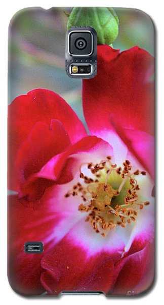 Flower Dance Galaxy S5 Case by Victor K