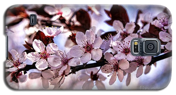 Galaxy S5 Case featuring the photograph Flowering Plum by Richard Lynch