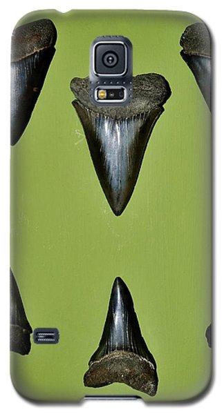 Fossil Mako Shark Teeth Galaxy S5 Case by Werner Lehmann