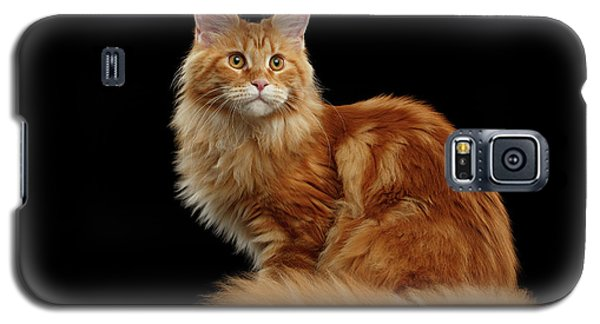 Ginger Maine Coon Cat Isolated On Black Background Galaxy S5 Case