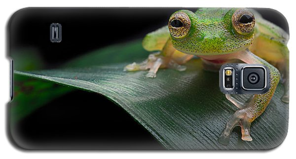 glass frog Amazon forest Galaxy S5 Case