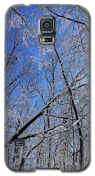 Glowing Forest, Knoch Knolls Park, Naperville Il Galaxy S5 Case