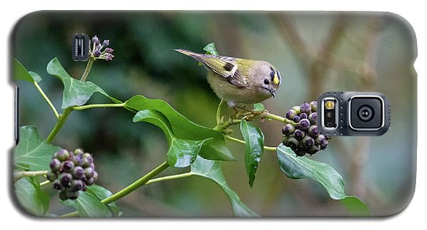 Goldcrest Galaxy S5 Case