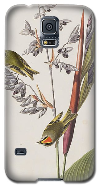 Golden-crested Wren Galaxy S5 Case by John James Audubon