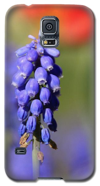Galaxy S5 Case featuring the photograph Grape Hyacinth by Chris Berry
