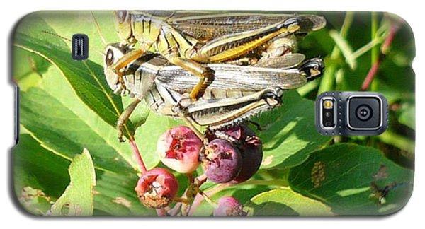Grasshopper Love Galaxy S5 Case