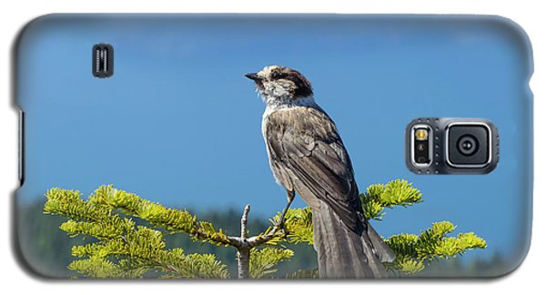 Galaxy S5 Case featuring the photograph Gray Jay by Kathy King