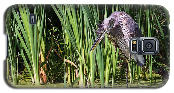 Galaxy S5 Case featuring the photograph Great Blue Heron Itch by Edward Peterson