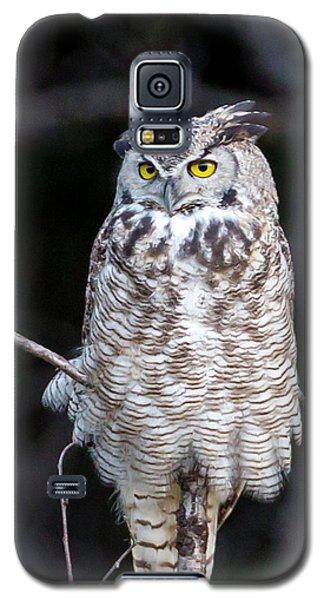 Great Horned Owl  Galaxy S5 Case by Jack Bell