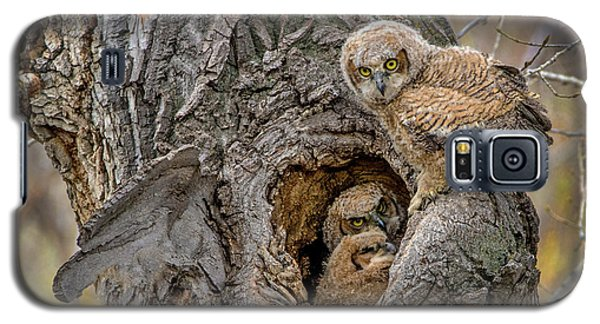 Great Horned Owlets In A Nest Galaxy S5 Case
