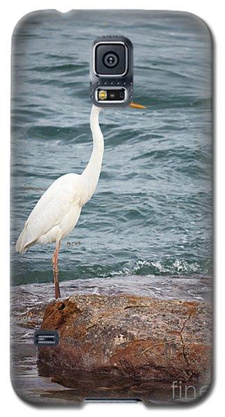 Great White Heron Galaxy S5 Case by Elena Elisseeva