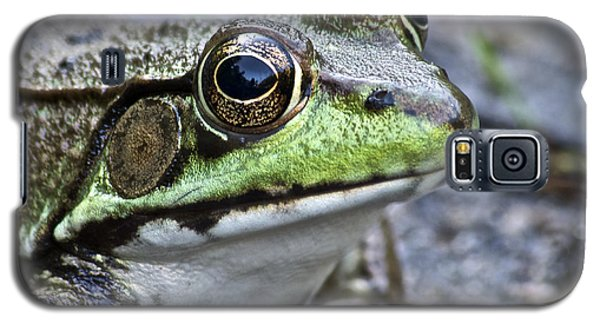 Green Frog Galaxy S5 Case by Michael Peychich