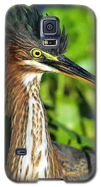 Green Heron  Galaxy S5 Case