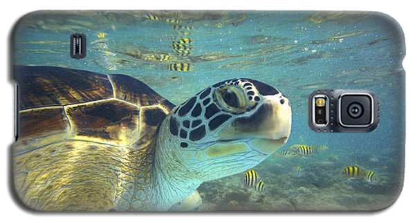 Green Sea Turtle Balicasag Island Galaxy S5 Case