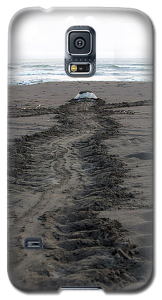 Galaxy S5 Case featuring the photograph Green Sea Turtle Returning To Sea by Breck Bartholomew