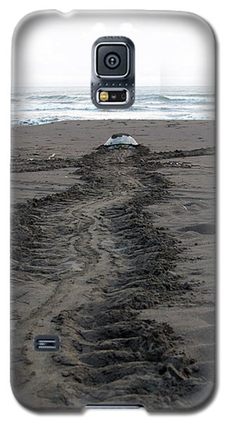Green Sea Turtle Returning To Sea Galaxy S5 Case by Breck Bartholomew