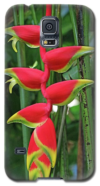 Hawaii Flora Galaxy S5 Case by Denise Moore