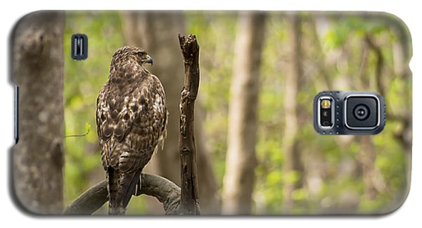 Hawk Hunting In The Woods Galaxy S5 Case