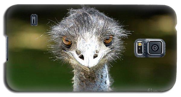 Head Of Ostrich Galaxy S5 Case