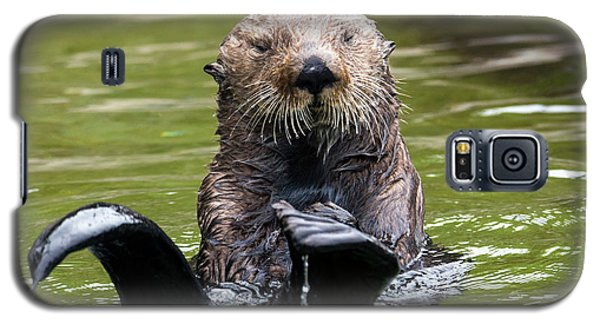 Otter Galaxy S5 Case - Heads Or Tails by Mike Dawson