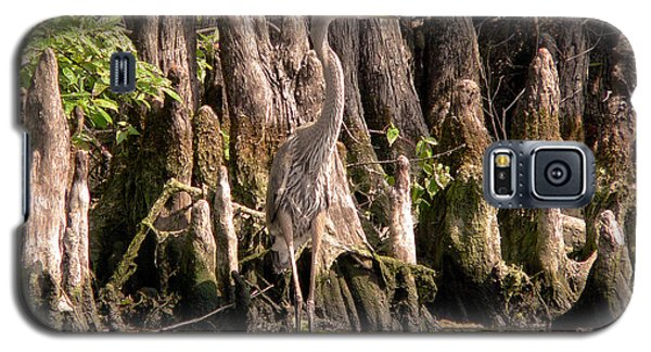 Heron And Cypress Knees Galaxy S5 Case