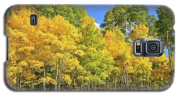 Galaxy S5 Case featuring the photograph High Country Aspens by Ray Mathis