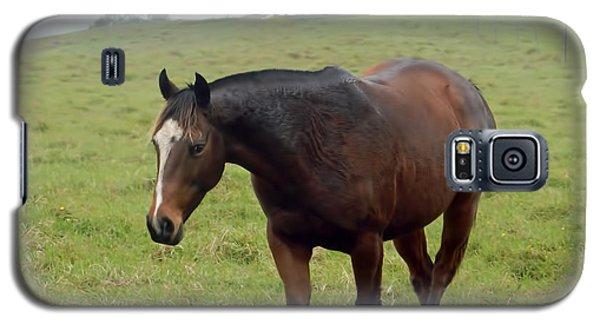 Horse In The Fog Galaxy S5 Case by Pamela Walton