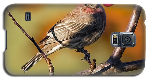 House Finch Galaxy S5 Case