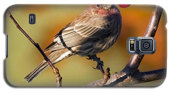 House Finch Galaxy S5 Case by Ricky L Jones