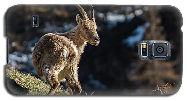 Ibex On The Mountains Galaxy S5 Case