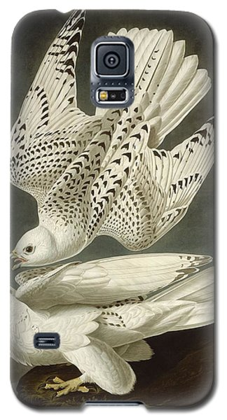 Iceland Or Jer Falcon Galaxy S5 Case by Anton Oreshkin