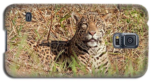 Jaguar Watching Galaxy S5 Case