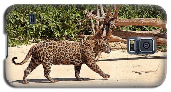 Jaguar Walking On A River Bank Galaxy S5 Case