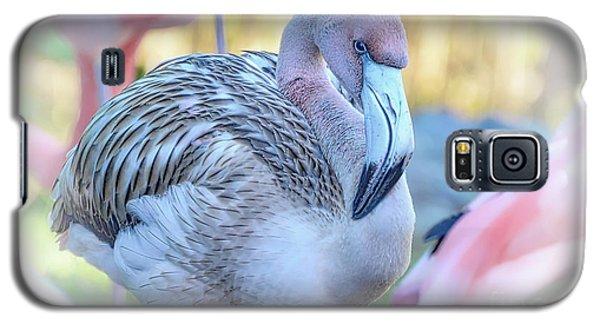 Juvenile Flamingo Galaxy S5 Case