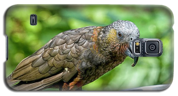 Galaxy S5 Case featuring the photograph Kaka by Patricia Hofmeester