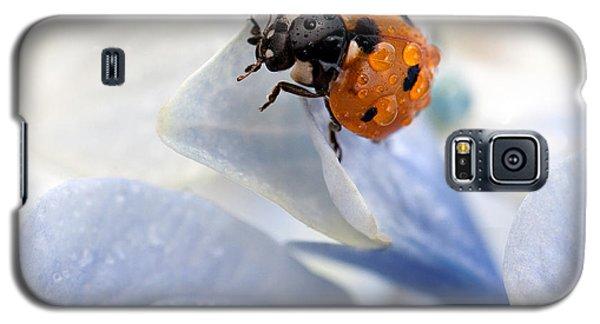 Ladybug Galaxy S5 Case by Nailia Schwarz