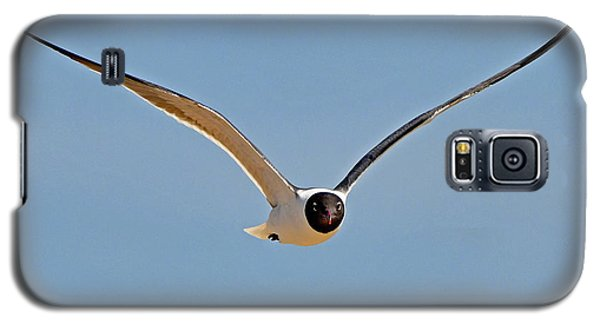 Laughing Gull Galaxy S5 Case