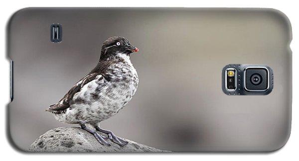 Auklets Galaxy S5 Case - Least Auklet by Tom Ingram