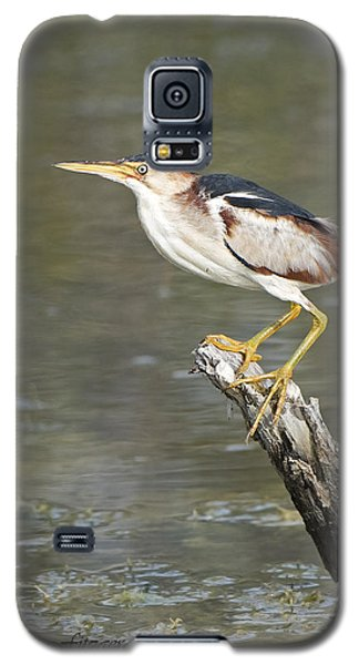 Least Bittern Galaxy S5 Case